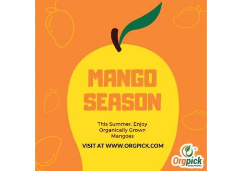 Mango Online Shopping India