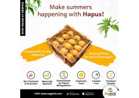 Alphonso or Hapus Mango Online at Orgpick