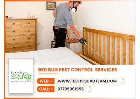 Bed Bug Control Services in Chennai