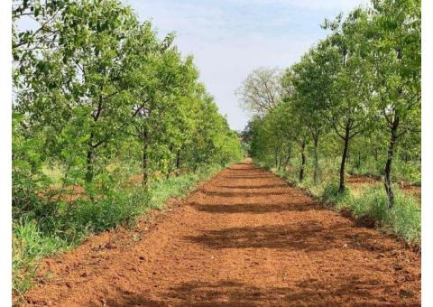 Farm Land for Sale in Hyderabad Shamirpet by Aalayam Reality