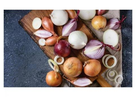 the most successful onion exporter